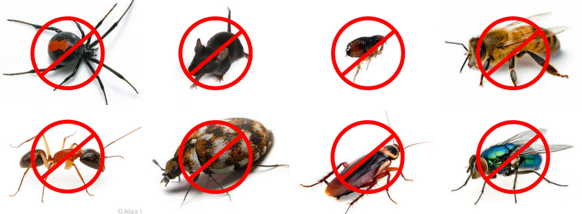 رش مبيدات وابادة حشرات بالرياض