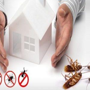 مكافحة الحشرات ورش المبيدات بالرياض